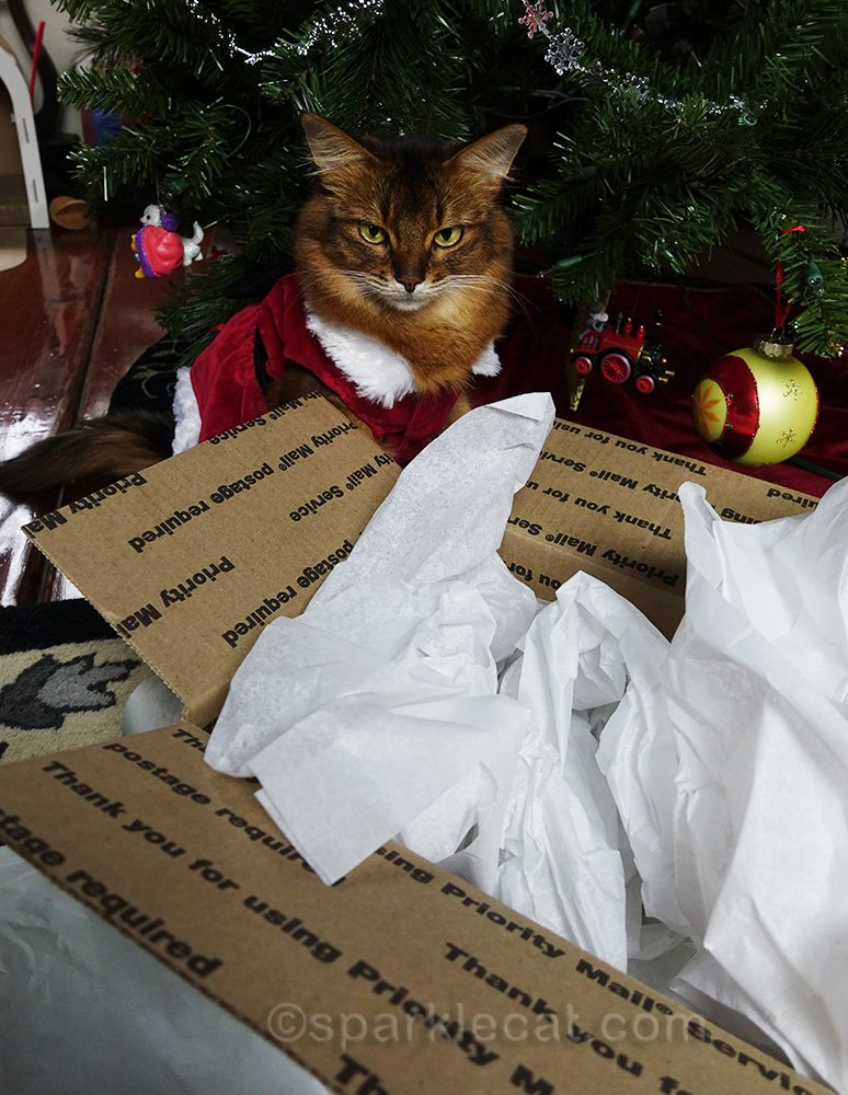 somali cat looking into box full of tissue paper