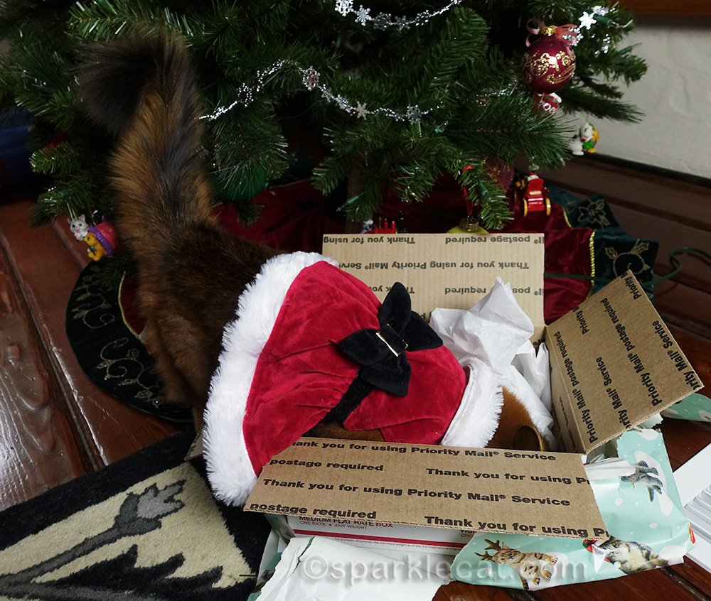 somali cat digging through tissue paper in box