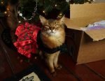 Summer shares her happy kitty Christmas, and the cat gifts she got.