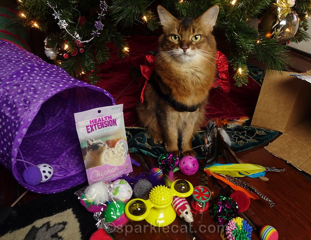 somali cat surrounded by Secret Paws gifts