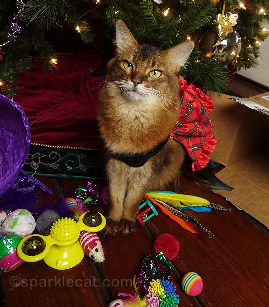 grateful Somali cat with Chritmas presents