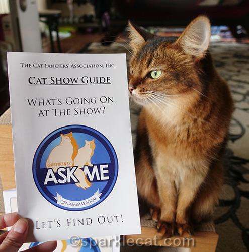 somali cat with CFA cat show guide