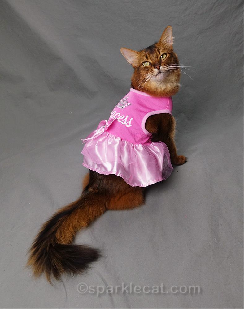 somali cat wearing princess dress