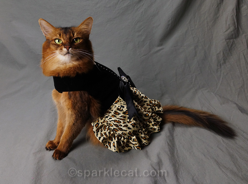Somali cat in evening dress with leopard print skirt