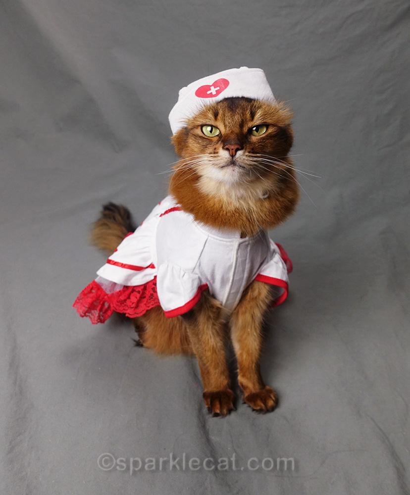 somali cat dressed in nurse kitty uniform