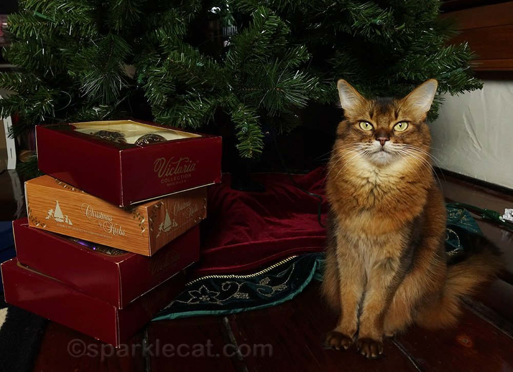 somali cat with vintage ornaments