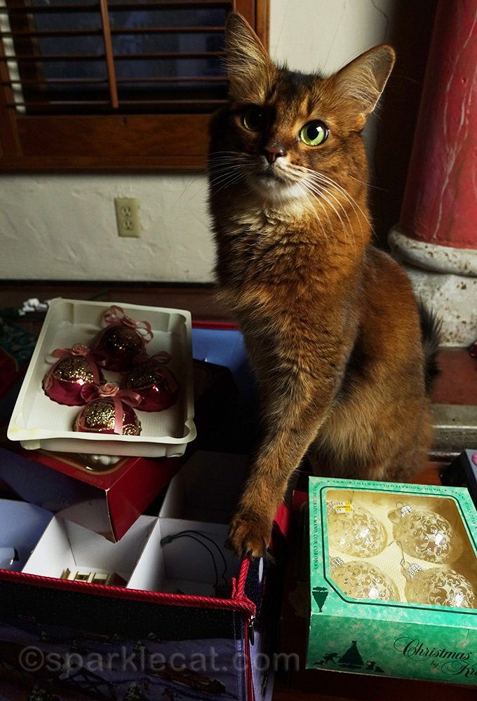 somali cat with christmas ornaments