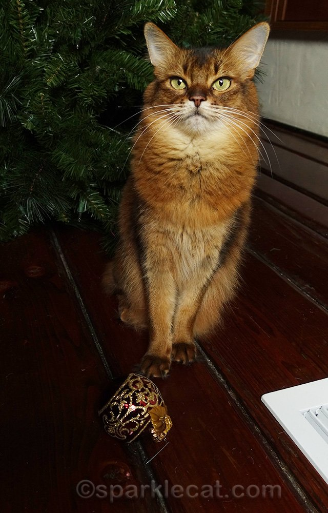 somali cat with rogue ornament