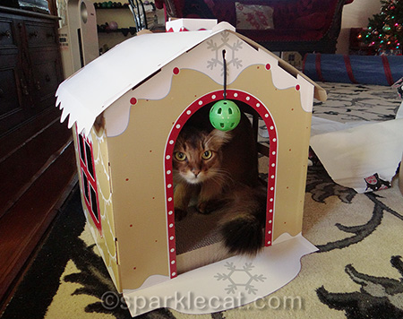 somali cat, gingerbread house scratcher