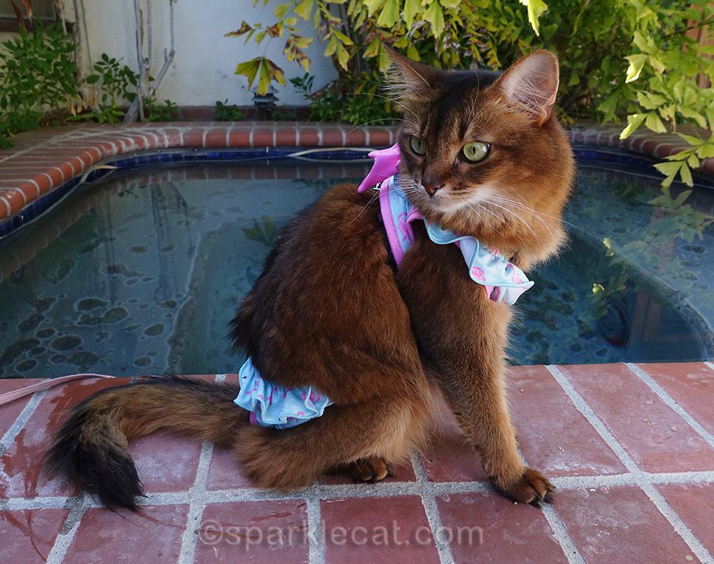 somali cat posing in bikini by jacuzzi