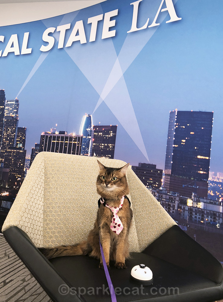therapy cat at Cal State L.A. downtown