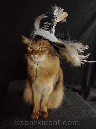 Somali cat, New Year's Eve cat hat