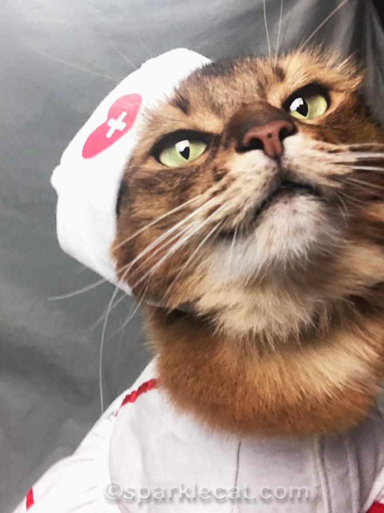 too close, off-center cat selfie