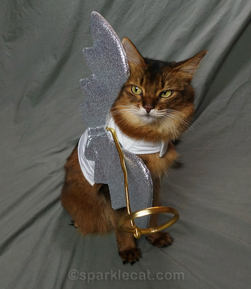 somali cat in angel costume with crooked wings and halo