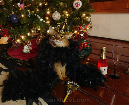 somali cat in feather boa and New Year's Eve hat