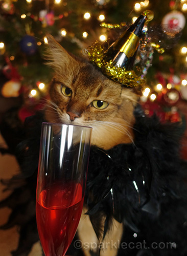 somali cat ready for a New Year's Eve toast