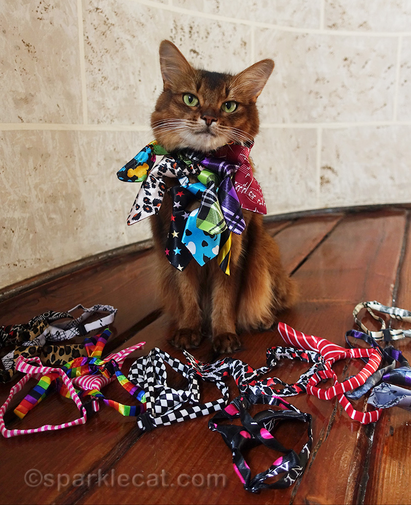 somali cat wearing a bunch of her new neckties