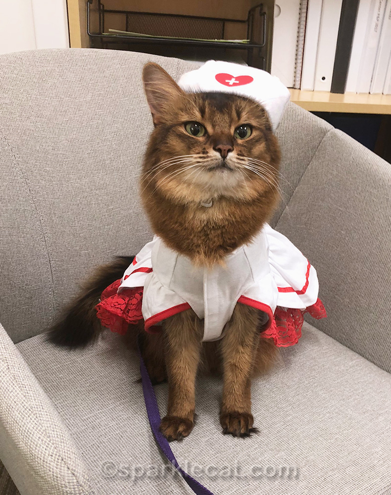 therapy cat in nurse kitty outfit