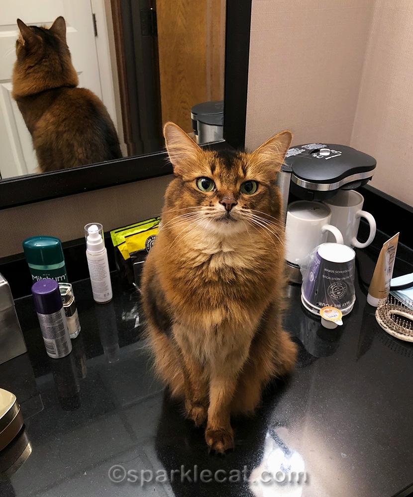 Somali cat in hotel bathroom