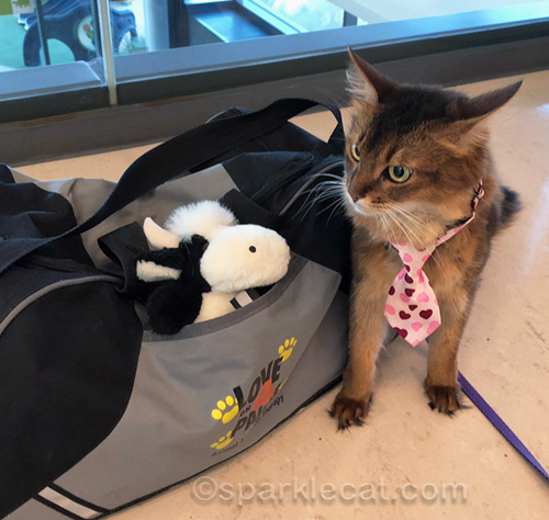 therapy cat mad at moo