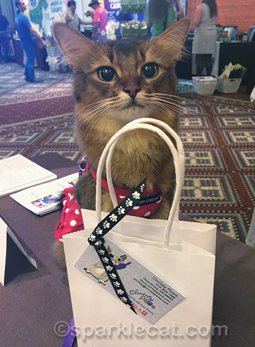somali cat with gift from Christy Paws