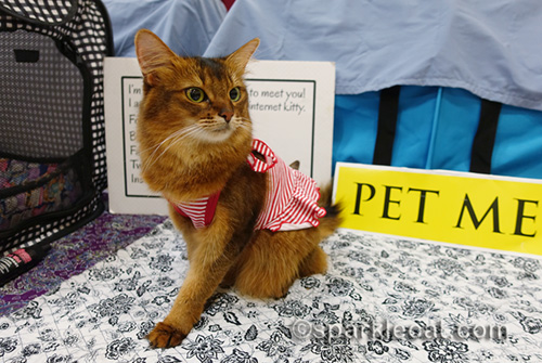 pet me cat in red striped dress