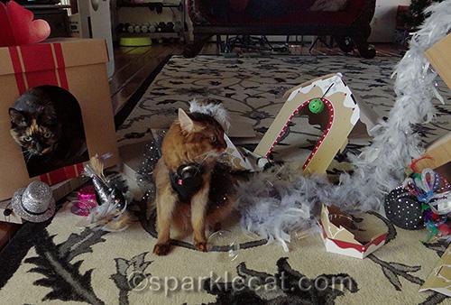 Somali cat, tortoiseshell cat, New Years Day, cat party