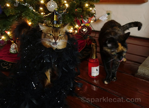 somali cat and tortoiseshell cat partying too much on New Year's Eve