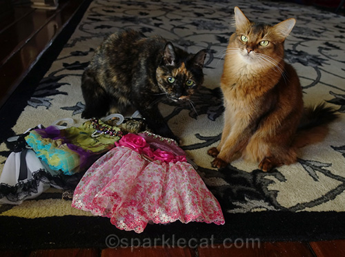 somali cat and tortoiseshell cat on Dress Up Your Pet Day
