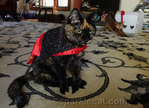 tortoiseshell cat wears devil cape