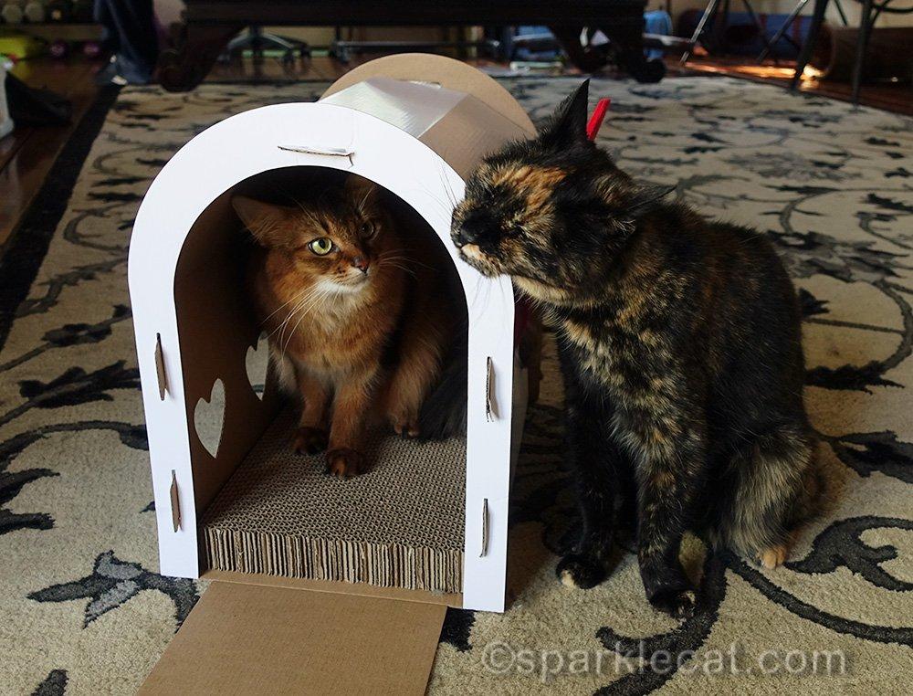 Tortoiseshell cat rubbing on mailbox cat scratcher house with somali cat inside
