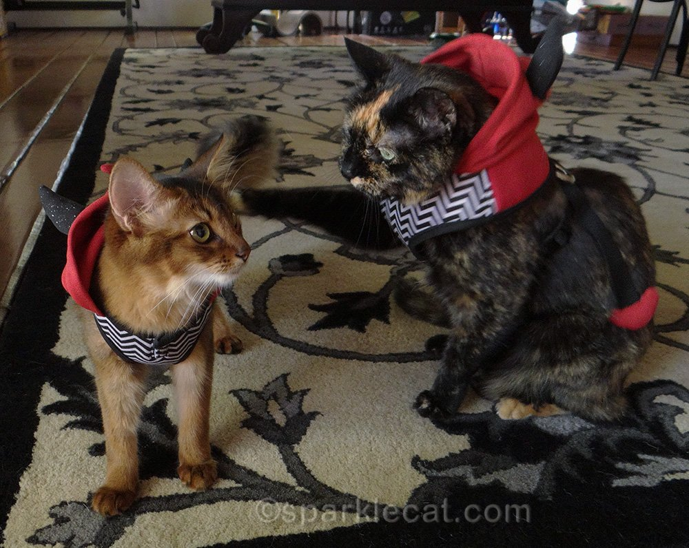 somali cat in devil costume getting the whapping paw from tortoiseshell cat in devil costume