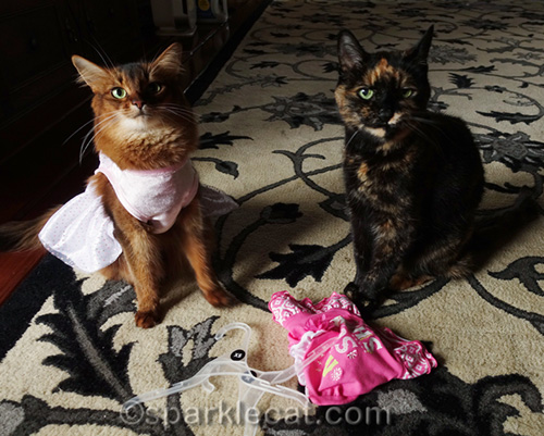 somali cat in dress with tortoiseshell cat sitting next to her