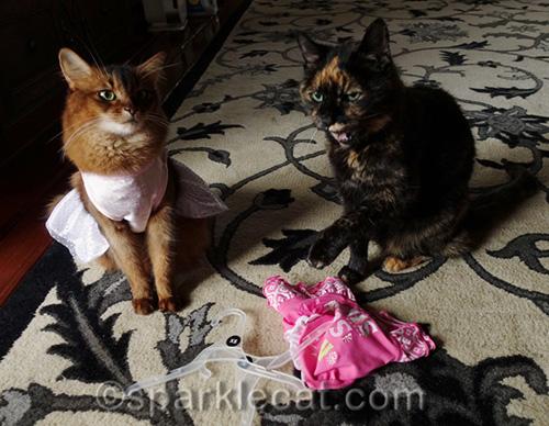 somali cat in dress and tortoiseshell cat making face