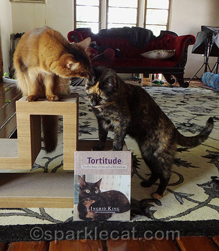 somali cat and tortoiseshell cat posing with Tortitude book
