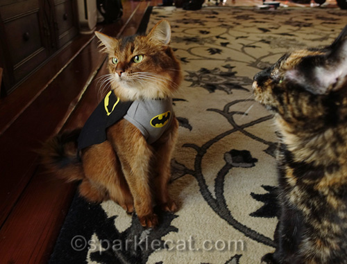 BatCat is annoyed at the presence of the tortoiseshell cat