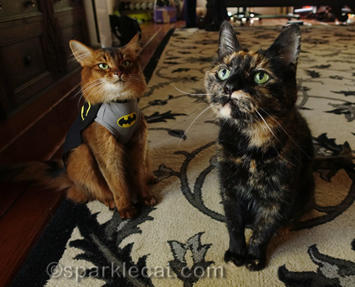 BatCat is ready to do battle with tortoiseshell cat. If only the tortoiseshell cat would notice