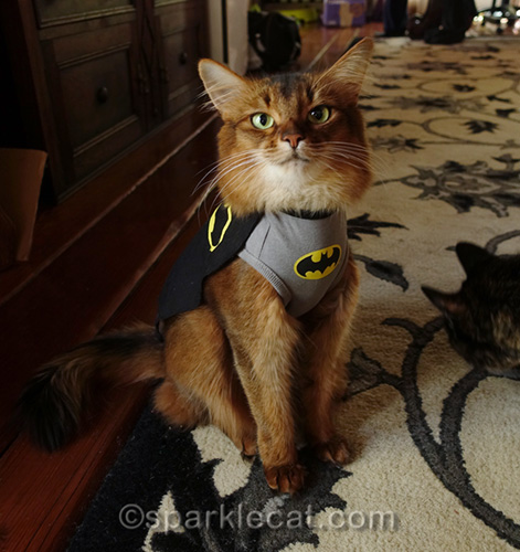 somali cat in Batcat t-shirt being photo bombed by tortoiseshell cat
