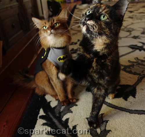 Batcat returns, with tortoiseshell cat sidekick