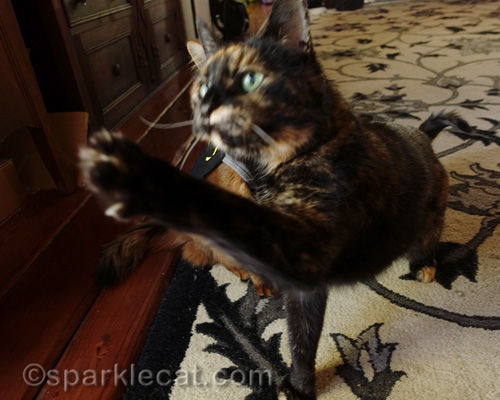 tortoiseshell cat barges in front of Batcat