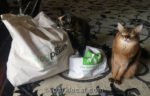 BlogPaws Swag: What to Keep, What to Give Away?