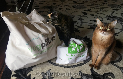 tortoiseshell cat and somali cat with blogpaws swag