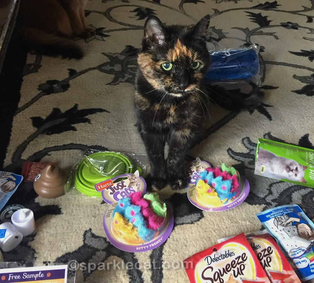 Tortoiseshell cat with Blogpaws cat swag