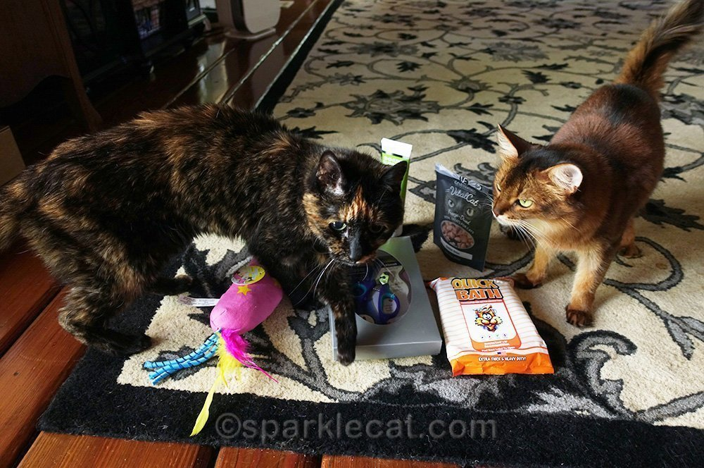 tortoiseshell cat barging in on somali cat's photo session