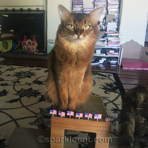 somali cat with flags for flag day being photo bombed by tortoiseshell cat
