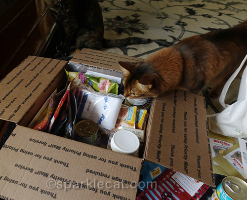 somali cat supervising Cat World Domination Day prize package packing