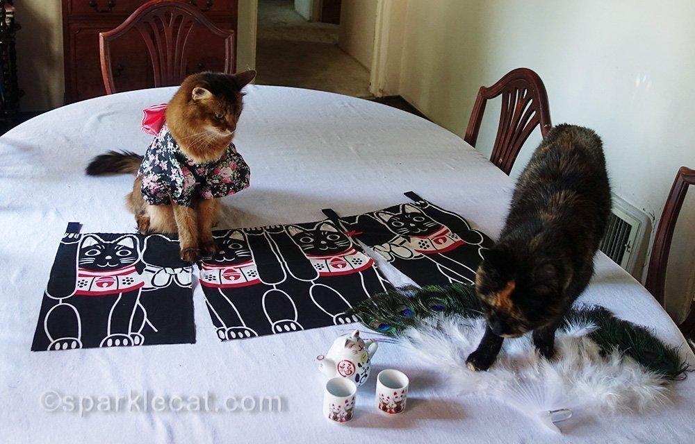 somali cat annoyed by tortoiseshell cat showing up