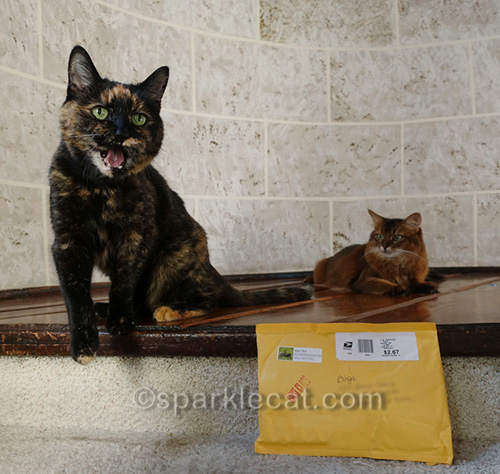 tortoiseshell cat excited about package