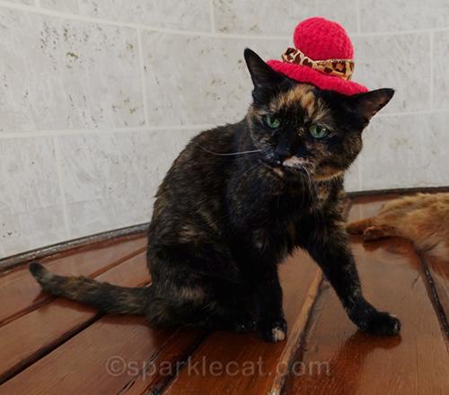 tortoiseshell cat wearing crotchety cougars hat