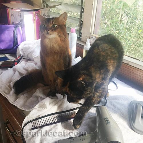 tortoiseshell cat ruining more photos